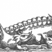 16th Century Whale Drawing